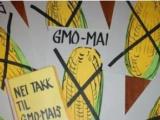 Az Európai Parlament nemet mondott a génmódosított kukoricára